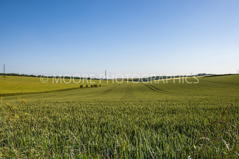 Green wheat field near Wantage