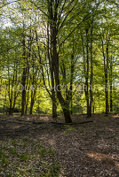 Woodland with fallen leaves