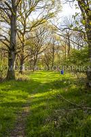 Path through woodland with blue barrel