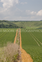 Two paths on edge of corn fields