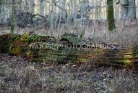 Fallen tree in woodland looks like crocodile