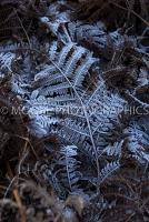 Frozen fern leaf with crispy white ice