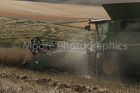Combine Harvester detail with a field of poppy seeds in the background