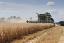Combine Harvester cutting winter barley in Wiltshire