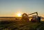 New Holland combine harvester loading into trailer at sunset