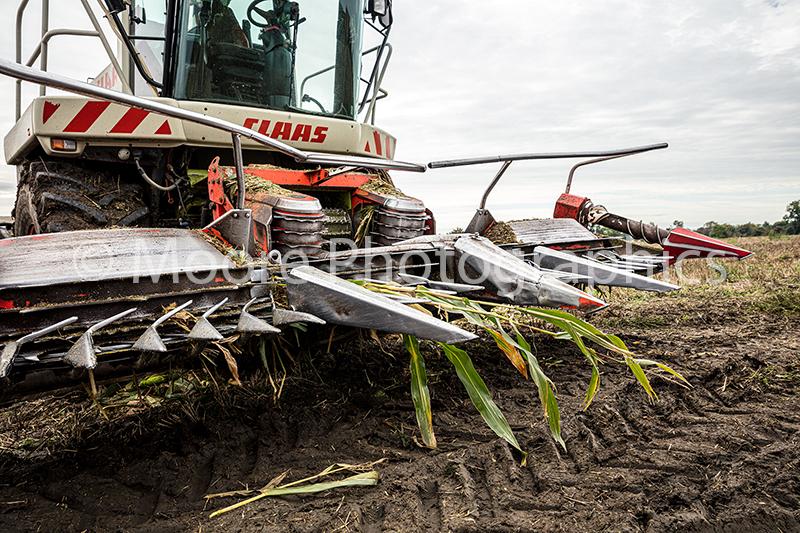 CLAAS maize shredding head