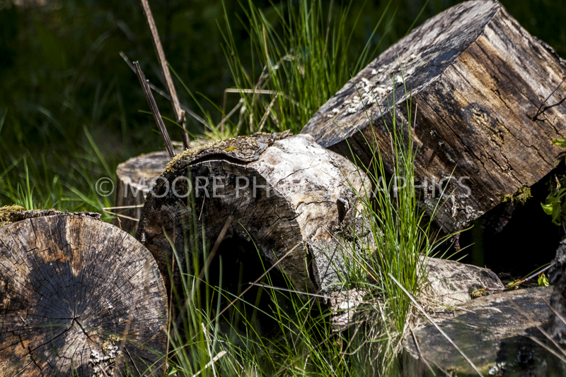 Logs grown over