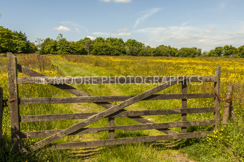 Gated field looking at buttercup meadow in Devon