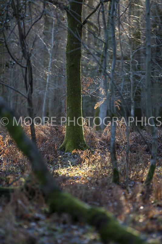 Sunlight in woodland