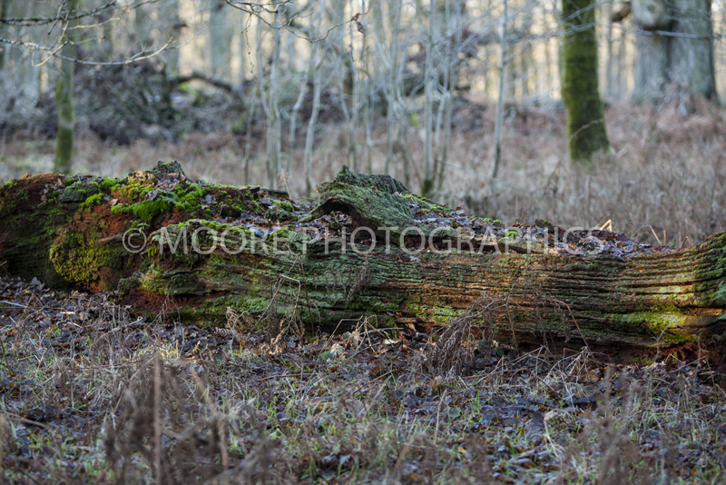 Fallen tree in woodland looks like crocodile