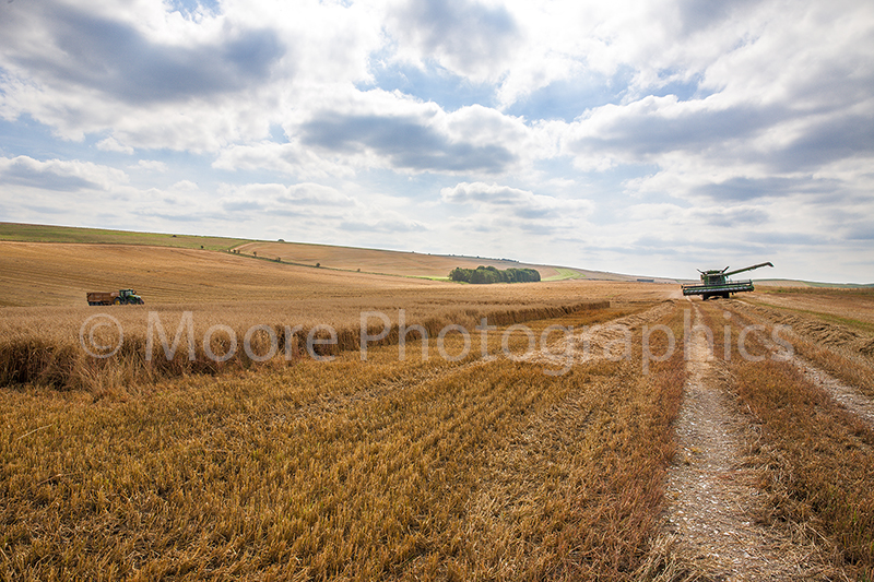 Combine Harvester moving to next strip