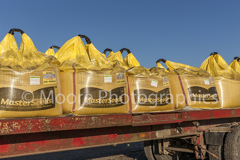 SKYFALL wheat seed in bags on trailer