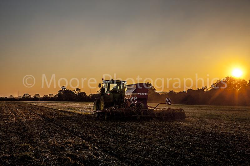 Sunset drilling of SKYFALL wheat using a John Deer 7250 tractor and Simba Horsch Sprint