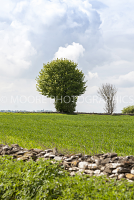 Mushroom shaped tree on hill