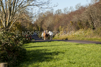 Horses being led along the road
