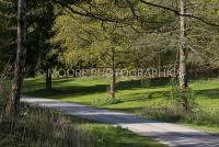 Lane through woods