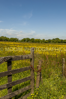Gated field looking at buttercup meadow in Devon