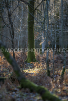 Sunlight in woodland