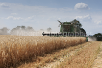 Combine Harvester cutting winter barley in Wiltshire