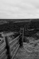 Yorkshire Moor